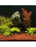 Flourish Nitrogen - Seachem