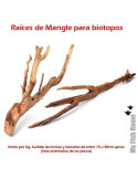 Vesicularia reticulata 'Erect moss'